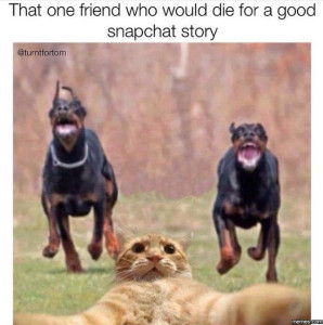Cat with dogs running towards him, with the caption, That one friend who would die for a good Snapchat story