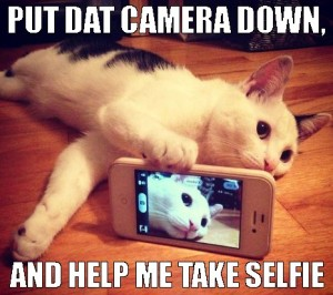 Cat with cell phone and the caption, Put dat camera down and help me take selfie