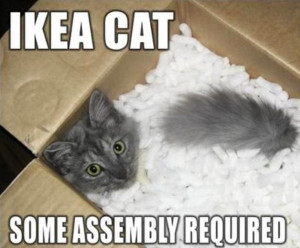 Cat in box with packing peanuts, and the caption, Ikea cat, some assembly required